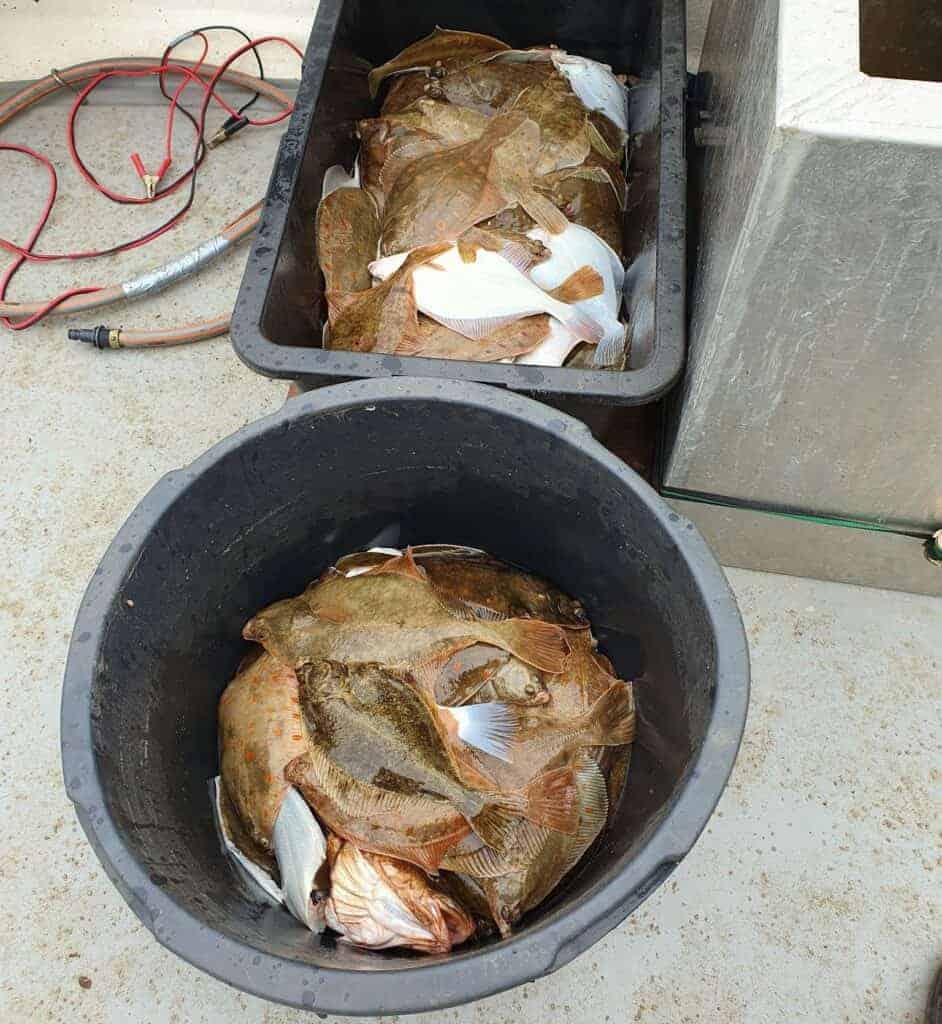 To murerbaljer fyldt med fladfisk ca. 150 styk. fanget fra båd ved fyn