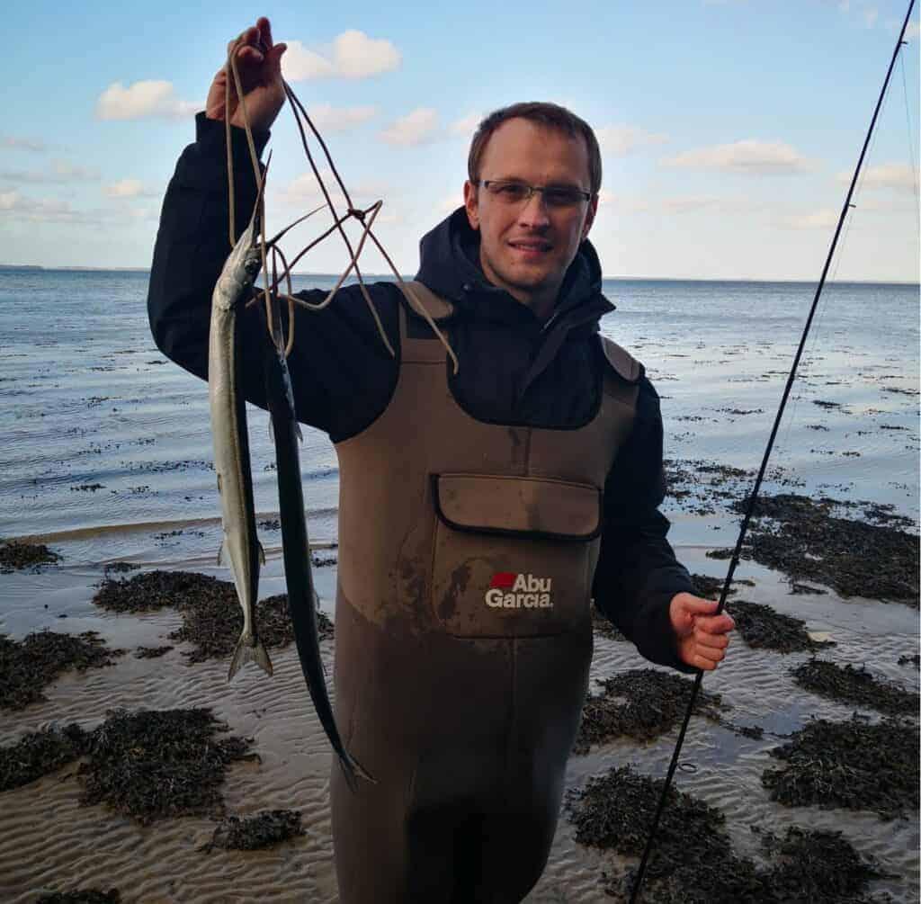 to hornfisk fanget ved kysten