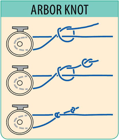 "En ""How to"" infographic til at binde en Arbor knot fiskeknude"